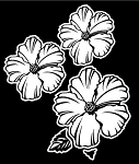 3 Hibiscus Flowers v3 Decal Sticker