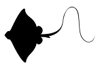 Manta Ray Silhouette Decal Sticker