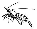 Shrimp Decal Sticker