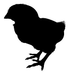 Baby Chick Silhouette Decal Sticker