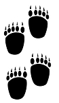 Bear Tracks Decal Sticker