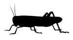 Grasshopper Silhouette Decal Sticker