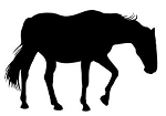 Horse Silhouette v20 Decal Sticker