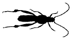 Insect v1 Decal Sticker