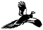 Pheasant v2 Decal Sticker