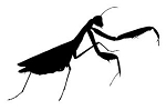 Praying Mantis v2 Decal Sticker