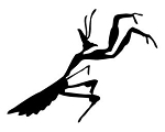 Praying Mantis v4 Decal Sticker