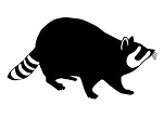 Raccoon v6 Decal Sticker