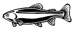 Rainbow Trout Decal Sticker