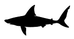 Shark Silhouette v4 Decal Sticker
