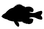 Sunfish Silhouette Decal Sticker